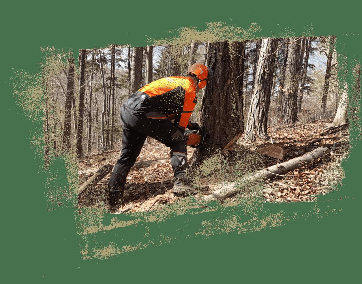 Ing. Jan Stuchlík | Lesnické činnosti, služby v lesnictví pro vlastníky lesů - Opava